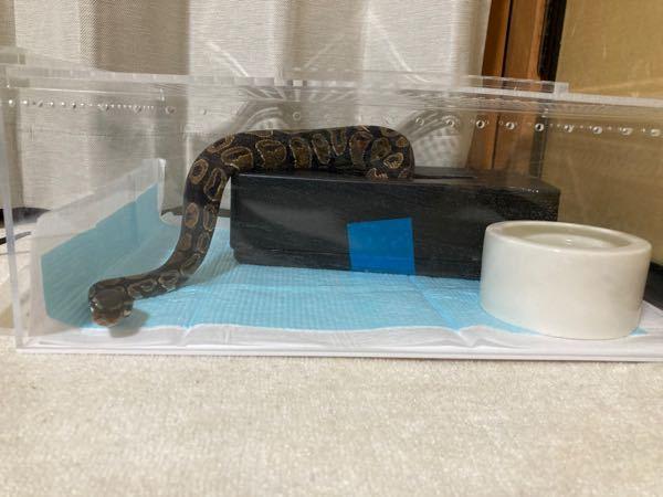 この蛇にこのケースは合ってますか?