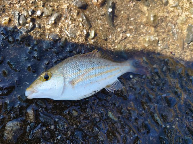 この魚教えて下さい!