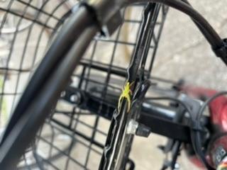 この虫はどういう虫ですか?? 自転車にくっついてて虫が嫌いだけどこれはザリガニみたいで少し可愛いと思ってしまいました