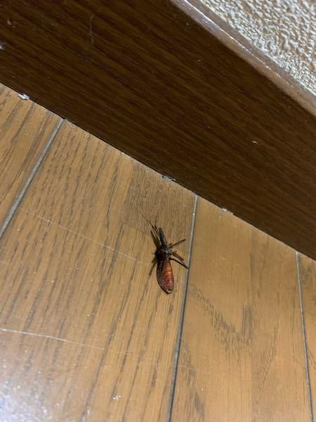 この虫なんですか? なんか壁にくっついてて、私は虫が大の苦手なので害があるのかわからないままゴキジェットで処理しました。写真は裏側です。表側は黒色でした。すごい不気味なフォルムで頭が異様に小さく、足と触角が異様に長かったです。 虫の名前、害の有無などがわかったら教えてください。