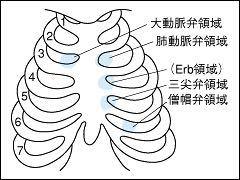 なぜ、肺動脈は右側にあるのに、聴診で聴く時は左側なのですか?