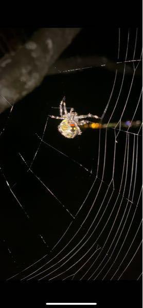 この蜘蛛はなんて蜘蛛でしょうか?