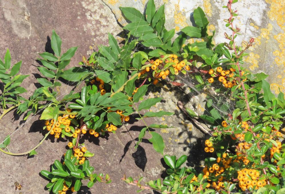 この植物の名前を教えてください。よろしくお願いいたします。
