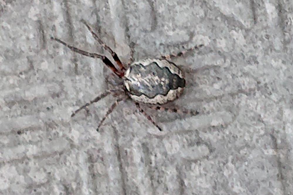 この蜘蛛なんていう蜘蛛ですか?