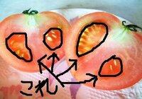 理科・トマトについて。 トマトの中のゼリー状のところありますよね? それってどういうふうに出来て、 どんな名前なんですか?  出来れば詳しくお願いします!