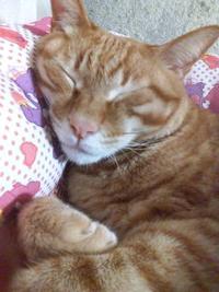 ネコを飼われてる方へ質問です。 ネコ好きな人は性格もネコっぽくないですか?(^^)  ①大勢でいるより一人でいる方が気楽で好きです。 ②お昼寝が大好きです。 ③家でゴロゴロしてる方が好きです。等