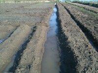 砂地の上に田んぼの土が乗っており、水はけの悪い畑があります。水はけを改善する良い方法はありませんか? 【畑の状態】 砂地の上に粘土質の土が40cmほど乗っており、その中間部分は固い粘土の層になっています。固い粘土の層は、鍬ではなかなか壊せません。 雨が降ると、数日は表面水が引きません。(添付画像の様な感じです)  【畑の経緯】 ・もともとは砂地で水はけの良い良質の畑だったらしいです...