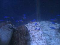 この魚なんですか? 今朝とって来ました 青くて尻尾が黄色です