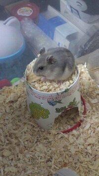 ハムスターの巣箱についてなんですが いま2つ入れています  1つ目は陶器製のもので 巣材として使ってる新聞紙を詰め込み寝床として使っていてます http://item.rakuten.co.jp/e-petyasan/534999/ こんな...