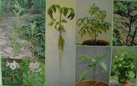 この写真の植物は何科の植物ですか?詳細も教えて頂けると嬉しいです。