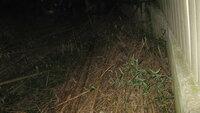 昨年の夏にシロアリの大群を発見しました。枯れた真竹がありますが、そこが巣になる可能性もありますか? 去年の夏に、庭にあった古い板を返したらシロアリの大群がいました。秋には数年前に切った杉の根っこに(2ヶ所)シロアリがいました。 すぐ近くには枯れた真竹が積んであります、そこからシロアリは発生しますか?もし発生するとしたら対処方法を教えて下さい。竹は我が家の竹ではありません。