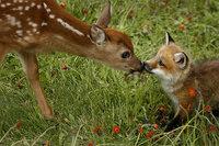 鹿と狐は仲がよいのですか?  また、仲がよくなかった場合、鹿と仲がよい、または鹿と関わりの深い動物を教えてください。