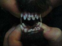 7ヶ月のオスのトイプードルですが上下の歯が乳歯と永久歯が写真の様に2列に生えています。まだ乳歯が抜ける様子の無い様に見えます。時間が立てば乳歯は抜けるのでしょうか?心配です。アドバイスをお願いします。