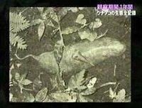 ツチノコの正体って結局これだったのですかね? 何年か前にアンビリーバボーのツチノコ特集で正体は旧日本軍が捕らえた野槌という生物だとか何とか言われていましたが…