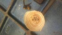 このハチの巣どのくらいの月日で出来るのでしょうか? 庭で作業中一匹のハチ。物置の中に入ったり、ついて来たり。 三日前にまたハチ。ふと見る と今度は水道メーターの鉄板の中に…水やりのペットボトルで穴をふさいで…昨日開けてみると、ハチは死にましたが巣がありました。結構家族は通る場所で、ビックリしてます。一匹で作ってたのでしょうか? こちらは札幌なのでやっと日中20度越えなのに、なんだか申し訳無い...