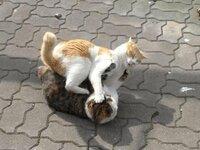野良猫同士のケンカの一番の原因は何ですか?