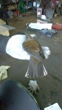 この鳥はなんと言う鳥ですか?