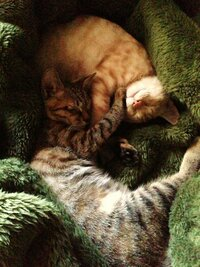 猫に【登ってはいけないところ】を教えるには? 現在、生後8カ月程度の猫を2匹飼っています。  登ってはいけない場所(ダイニングテーブルとキッチン、オーブンレンジのある棚)に何度も登ってしまって、困って...