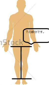 太ももから足の付け根までの部分ってなんていうのですか。