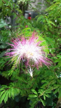 にゃんこ先生 こんばんは~☆   いつも綺麗なお花を楽しませてくれてありがとう*:.。. .。.:*・゜゚・*:.。.   なんか 明日 京都へという言葉で  うれしくって 回答リクエスト しちゃいました~♡♡♡ 明日、私の日...