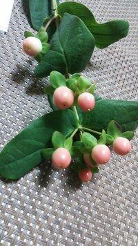 この植物の名前が分かる方いますか?「赤い実 植物」などで検索しても分からないのです。 植物に詳しい方がいたらお知恵を貸してください。 よろしくお願いします。