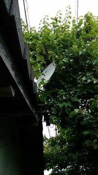 現在無人になっている隣家から植物の枝が衛星放送のアンテナに絡まり受信状態が悪くまった受信しないことも多いのですが、土地の持ち主に連絡しても対処してもらえず購入した店に相談したら枝を 切るのも違法になると言われました。  何か良い方法があれば教えて下さい。 宜しくお願い致します。