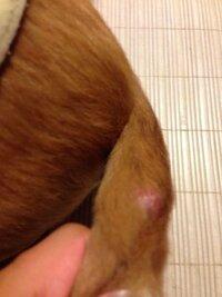 犬のしっぽに腫れてる所があるんですが病院に行った方がよいですか