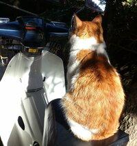 邪道と王道。  その違いを、わかりやすく教えていただけますか?  たとえば・・ この考え方は間違いでしょうか?  ネコが無免許運転⇒邪道 ネコが免許を取得して運転⇒王道