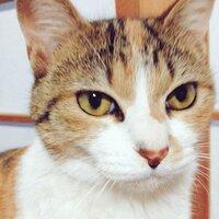 猫 食事 固い   私は猫を飼っています。元野良猫 迷子猫なので年齢は不明ですが、まだ若いです。 メスで不妊治療しました。  餌はカルカンというカリカリしたキャトフードをあげてます。 うちの子には固い...