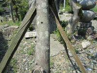 植木の幹のカビ? 病気? 汚れについて教えてください。 自宅の庭の木の幹に写真のような緑っぽい斑点というか、汚れがあります。 写真は、おおゆずの木ですが、ほかの木も同じようになっています。 これはなんでしょう? まず、有害なものかどうかを知りたいと思います。 次に、これを取るにはどうしたらいいのでしょうか?