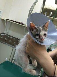 ペットショップで猫様を買う人は「こんな汚い猫はいらない」と思ってるんでしょう? あ、ちなみにこの猫様は私が保護した猫様です。