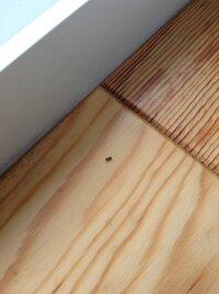 アリの有効な駆除方法 アリが家に入ってきて困っています。家には犬がいるので薬剤の使用は控えたいです。皆様よろしくお願いしますm(_ _)m