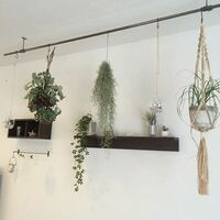 真ん中の植物、モジャモジャしてるグリーンはなんという名前ですか?何処で売ってますか?