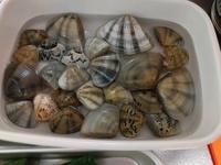 今日海でたくさんの貝を拾いましたが、食べられるのか種類は何なのか教えていただけないでしょうか?  場所は佐賀県唐津市の普通の海水浴場の浜辺です。 潮干狩りの季節ではないので、やはり 食べるのはやめた方がよいですか?