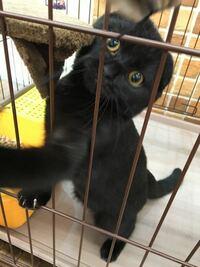 この猫ちゃんの目の色は何色なんでしょうか? 生後約5カ月のスコティッシュです。  また、これから目の色が変わる事もあるのでしょうか?