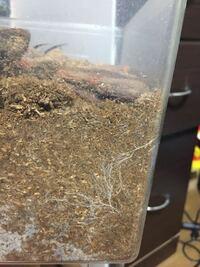 カブトムシ 土 カビ