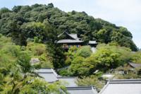 奈良県の長谷寺ってそんなに有名ではないんでしょうか?。 僕は近鉄沿線に住んでるんですが、僕の母親が「長谷寺って鎌倉以外にあるの?。」って言ってたんです。