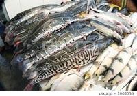 この魚、なんていう名前ですか? トラ模様のような縞々している真ん中の少し気味の悪い魚です。  以下写真。 アマゾン川の魚市場の画像です。  出来れば写っている全部の魚の名前を教えてください。