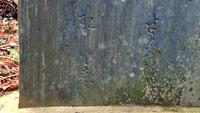 石碑の文字の読み方を教えて下さい。  右は、「半?舎梅理」。 左は、「配(空白)?志女」 の? 部分ががわかりません。 よろしくお願いいたします。  千葉県北部の印西市吉高にある宗像神社前の石碑です...