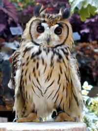 フクロウは、フクロウ目フクロウ科フクロウ属ですが、モリフクロウやウサギフクロウなど、同じ種類なら同じ目や科なるのですか?他の動物のパターンでも同じですか?wikiに載っていないので困っています。教えてくだ さい。
