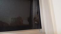 鳥が寝に来ることについて。 北側の階段上の押し出し式窓を、最近暑いので夜になっても閉めずに少し開けたまま寝てしまっていました。(一応足掛かり等なく、下は家周り防犯砂利ひいてるので…) 数日前、押し出し窓...