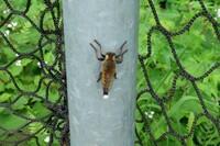 アブのようなこの昆虫の名前を教えていただけませんか? ・画像不鮮明で恐縮です