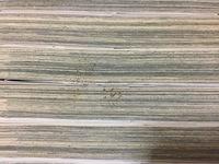 画像の本についてる茶色い粒についてなんですけどこれは虫ですか? どういうものなのか教えてください。
