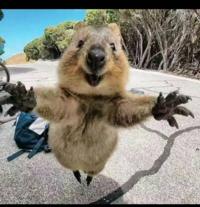 の 握力 コアラ