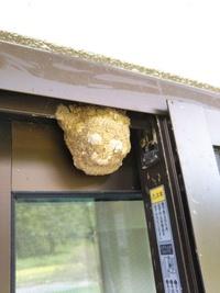 自宅の2階の窓の外側に、土の塊を発見しました。 大きさは5センチくらいで、穴は無いようです。 何かの巣でしょうか?!