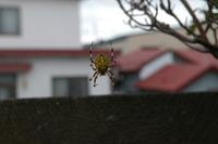 このクモは何クモ?体長3センチ程 毒蜘蛛ではないですか?