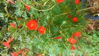 この花の名前を御存知の方 いらっしゃいましたら  ご教示下さい(=^・^=)