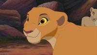 雌ライオンがプライドを率いることはありますか? またはその権利を手にすることはあるんですか?