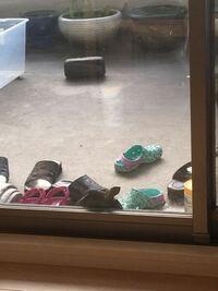 ベランダの亀が室内に入りたいと言います ソロソロ冬眠ですか?