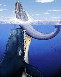リヴィアタン・メルビレイは。   なぜ、種として絶滅したのですか・・? 強大な牙と強靭な体躯を持って、この世から消え去った訳がわかりません。  恐竜ならわかりますが「リヴィアタン・メルビレイ」の絶滅の理由を教えてください。